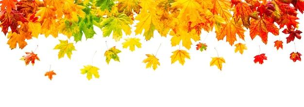 Kolorowa granica liści klonu na białym tle
