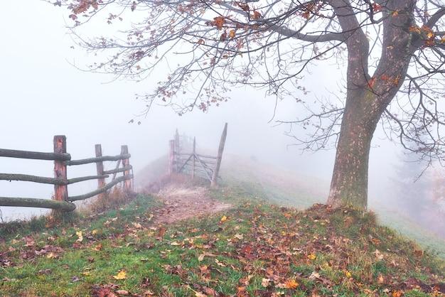 Kolorowa jesień krajobraz scena z drogą w górach.
