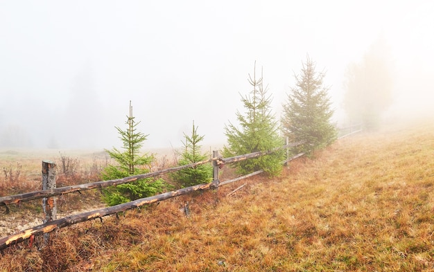 Kolorowa jesień krajobraz scena z płotem w górach.