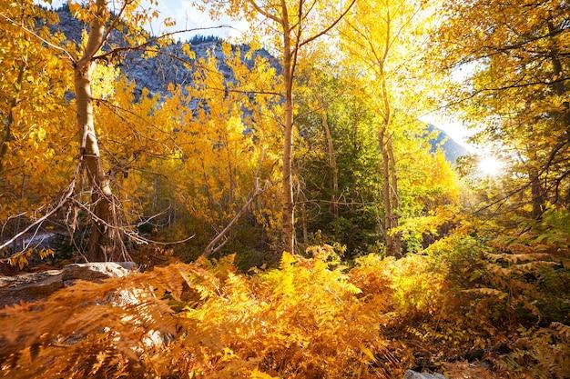 Kolorowa jesień w górach