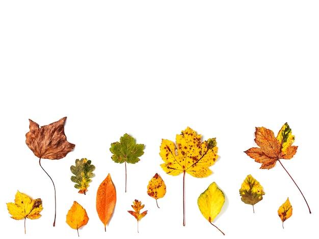 Kolorowa kolekcja jesiennych liści na białym tle