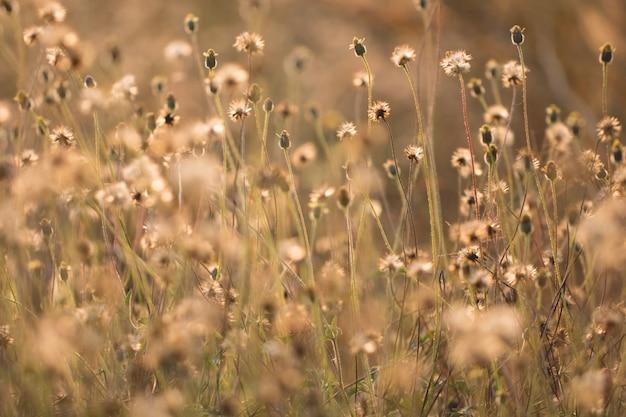 Kolorowa kwiat trawa robić z gradientem dla tła, abstrakta, tekstury, miękkiego i zamazanego stylu, pocztówka.