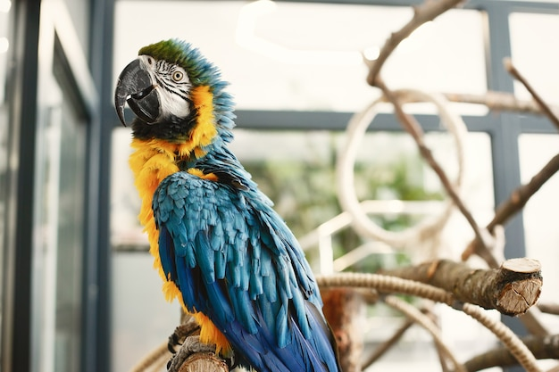 Kolorowa papuga na gałęzi. papuga niebiesko-żółta i czarna. piękna papuga.