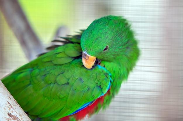 Kolorowa papuga w klatce przy zoo.