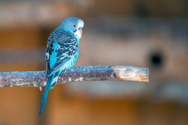 Kolorowa papuga w klatce w zoo.