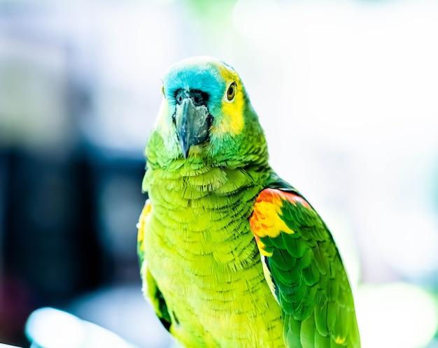 Kolorowa papuga z bliska