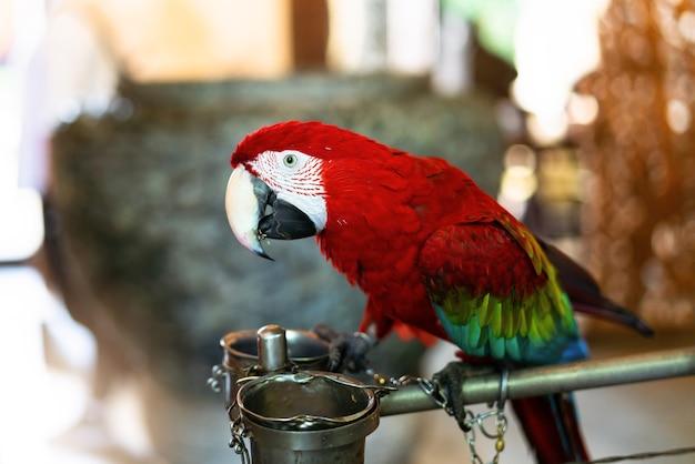 Kolorowa papuzia czerwona szkarłatna ara, kolorowy ptak umieszcza na gałąź