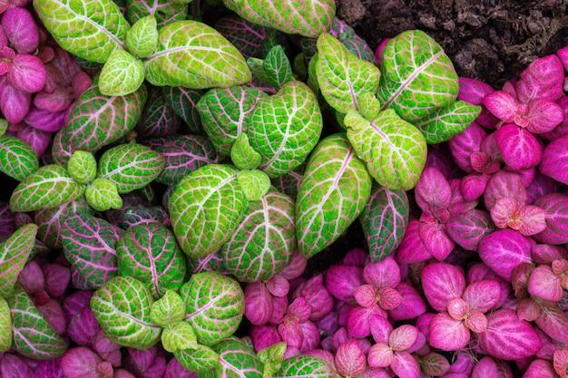 Kolorowa tekstura liści na tle