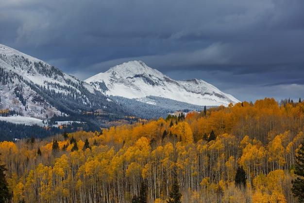 Kolorowa żółta jesień w kolorado, stany zjednoczone. jesień.