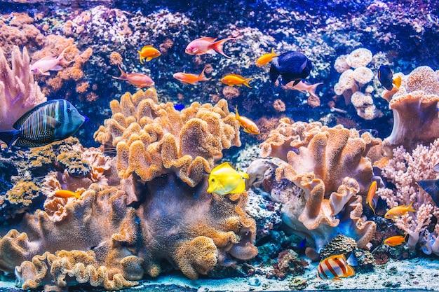 Kolorowe akwarium z różnymi kolorowymi rybami pływającymi