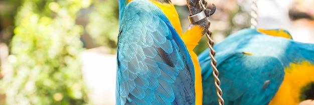 Kolorowe ary w parku. dzikie ptaki