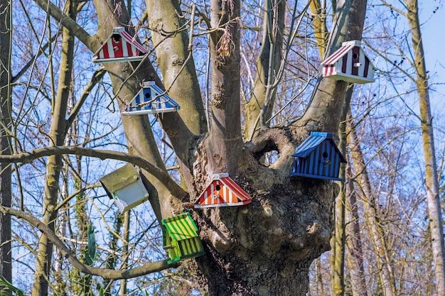 Kolorowe budki dla ptaków na gołych gałęziach drzewa