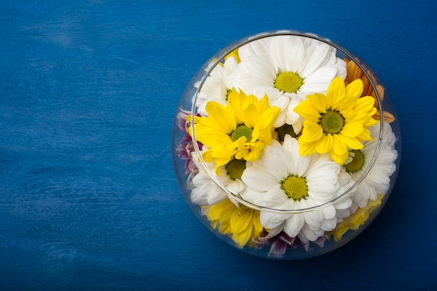 Kolorowe chryzantemy w szklanym wazonie na niebieskim tle. skopiuj miejsce