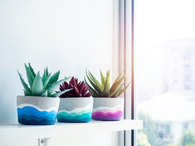 Kolorowe diy okrągłe doniczki betonowe z zielonymi i czerwonymi sukulentów na białej drewnianej półce na białej ścianie w pobliżu szklanego okna z miejscem na kopię. trzy unikatowe kolorowe donice do cementu pomalowane na kolor.