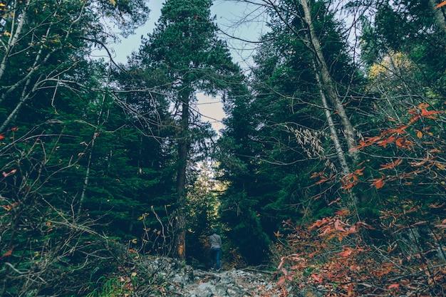 Kolorowe drzewo i leśna przyroda bez szlaku.