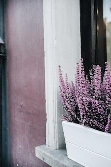 Kolorowe fioletowe kwiaty w doniczce na zewnątrz