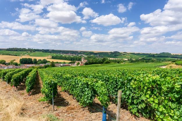 Kolorowe gorące powietrze balony latające nad szampanem winnice o zachodzie słońca montagne de reims, francja