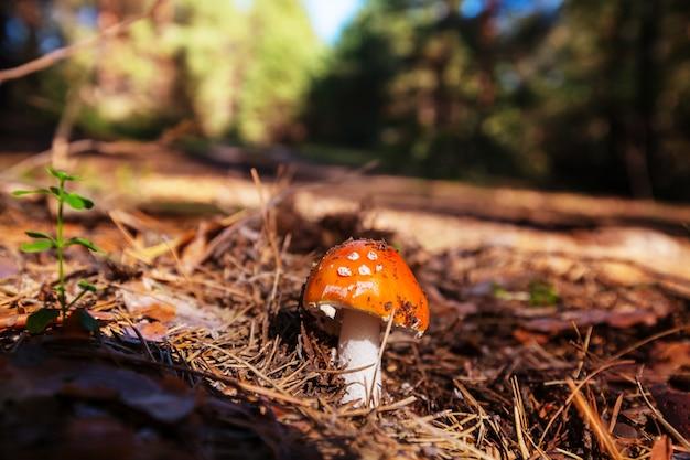 Kolorowe grzyby w lesie w sezonie jesiennym.