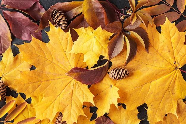 Kolorowe i jasne tło z opadłych liści jesienią.