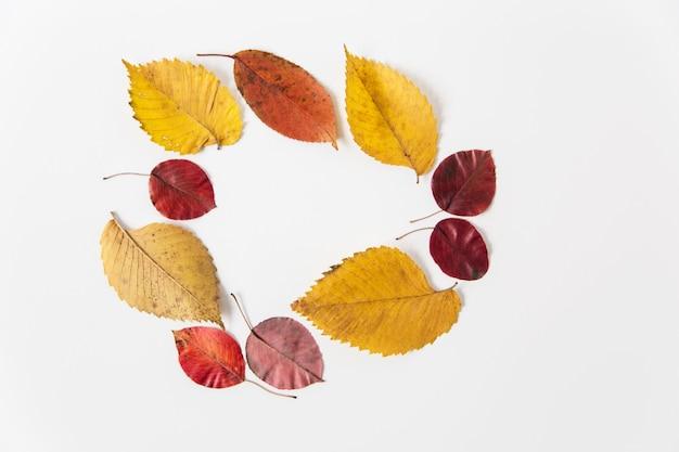 Kolorowe jesienne liście. leżał na płasko. miejsce na tekst. szablon do projektowania. białe tło. minimalistyczny styl.