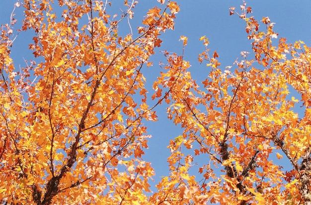 Kolorowe jesienne liście na drzewie w lesie na tle nieba