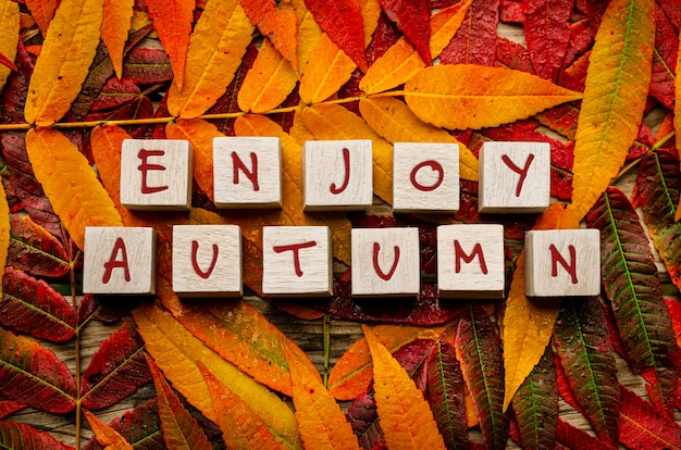 Kolorowe jesienne liście na szarym drewnie z napisem ciesz się jesienią na drewnianych klockach