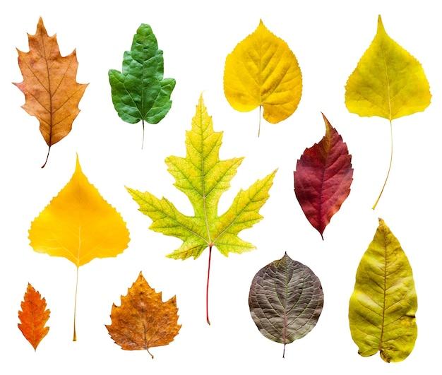 Kolorowe jesienne liście ustawione na białym tle
