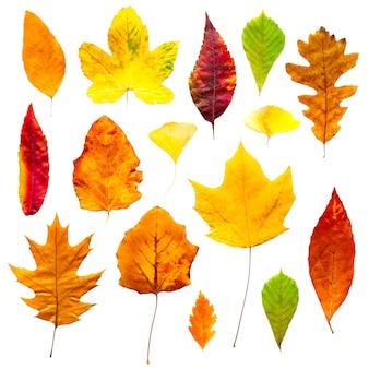 Kolorowe jesienne liście zestaw na białym tle