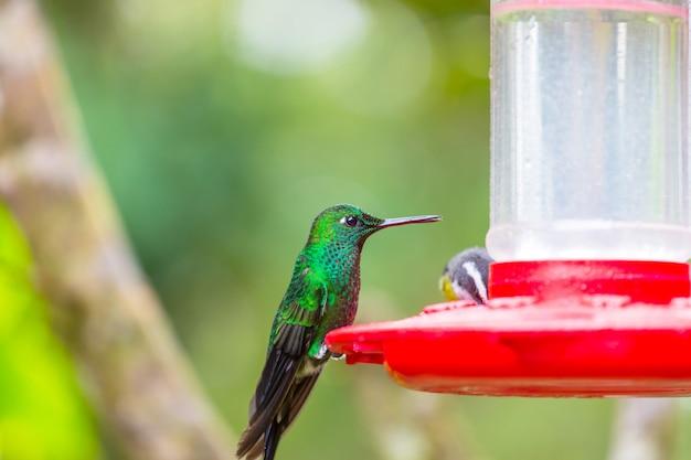 Kolorowe kolibry w kostaryce, ameryce środkowej