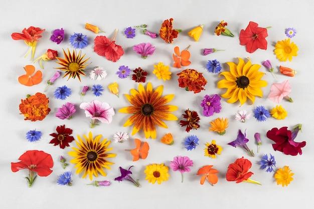 Kolorowe kwiatki. wielokolorowe kwiaty naturalne na szarym tle. szablon projektu widok z góry flat lay.