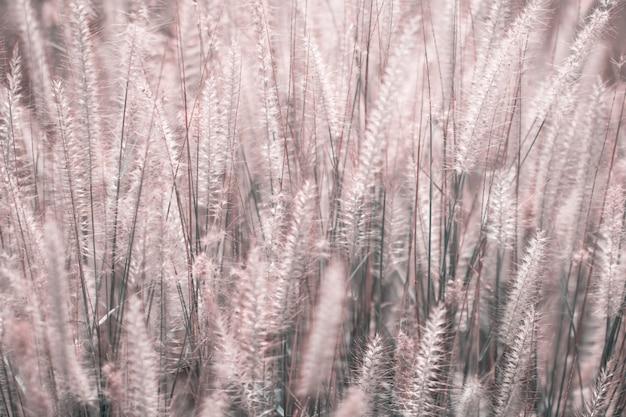 Kolorowe kwiaty trawy wykonane z gradientem na tle