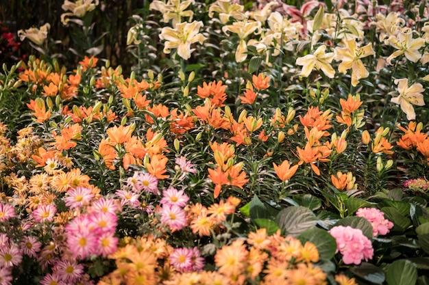 Kolorowe kwiaty w ogrodzie.