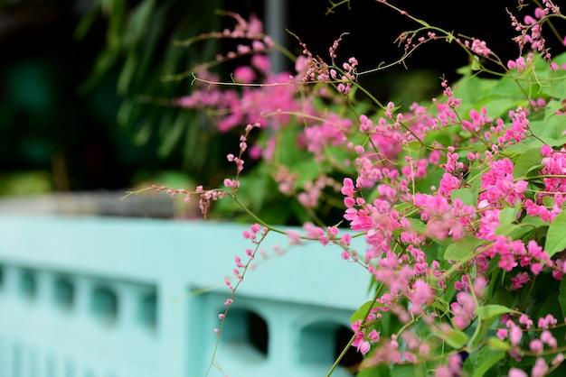 Kolorowe kwiaty w przyrodzie