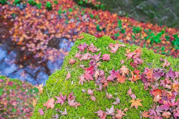 Kolorowe liście spadające w ogrodzie