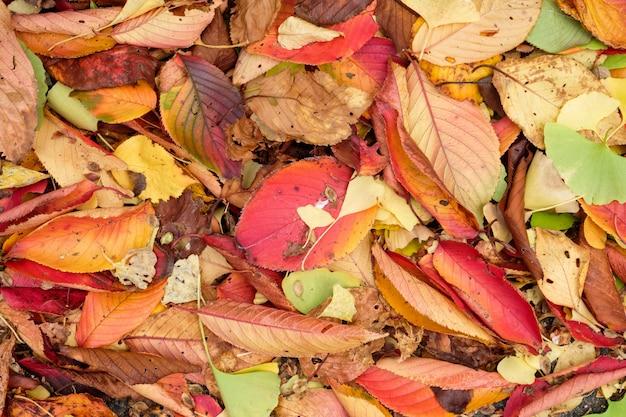 Kolorowe liście świeże i suche na ziemi w jesiennym ogrodzie