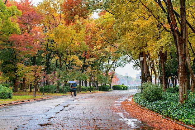 Kolorowe liście w jesiennym parku. jesienne sezony.