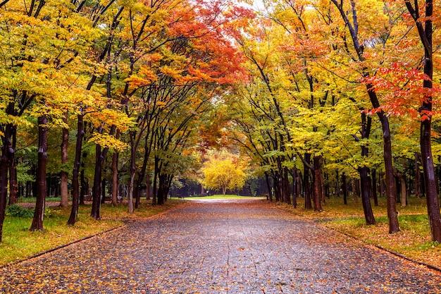 Kolorowe liście w parku jesień