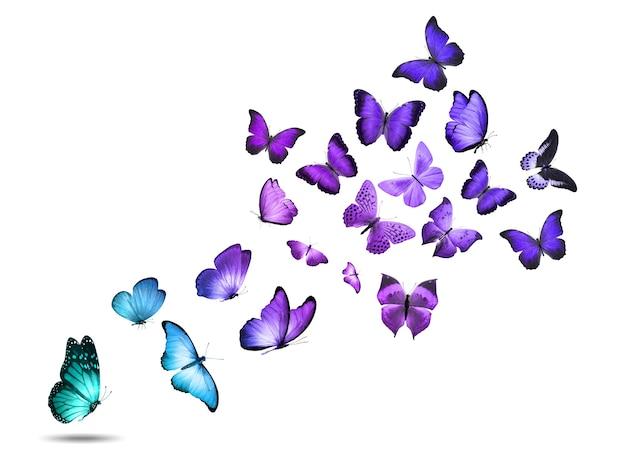 Kolorowe motyle latające na białym tle na białym tle. zdjęcie wysokiej jakości
