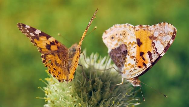 Kolorowe motyle na kwiatku.