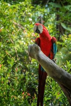 Kolorowe papugi ara na gałęzi drzewa