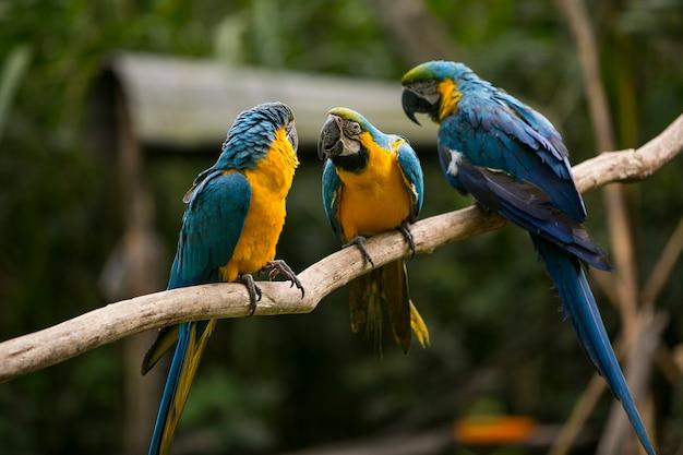 Kolorowe papugi na drzewie w yungas