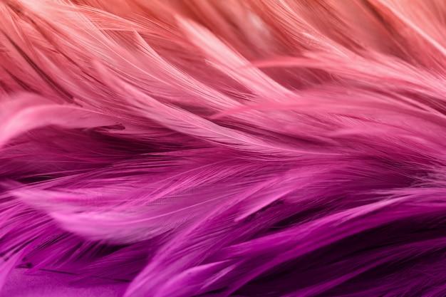 Kolorowe pióra kurczaka w miękkim i rozmycie stylu na tle