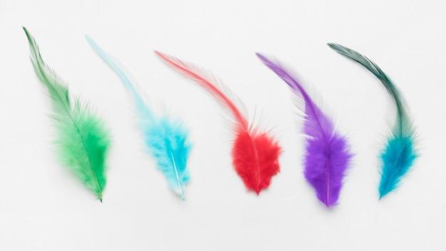 Kolorowe pióra na białym tle