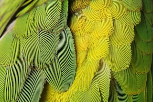 Kolorowe pióra