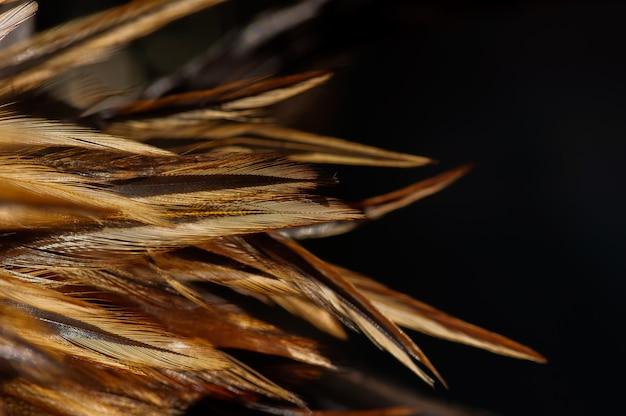 Kolorowe piórko z kurczaka, wybrane skupienie, naturalny backgroun