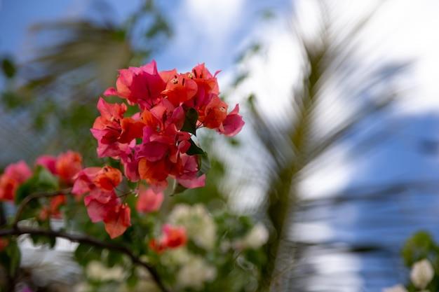 Kolorowe rośliny i kwiaty na wyspie madagaskar