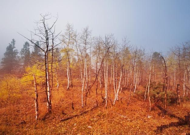 Kolorowe sceny lasów słoneczny w sezonie jesiennym z żółtymi drzewami w pogodny dzień.