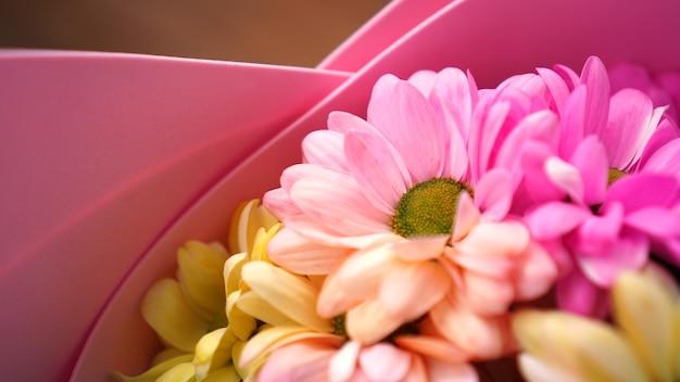 Kolorowe stokrotki chryzantemy w tle - kolory różowy i żółty