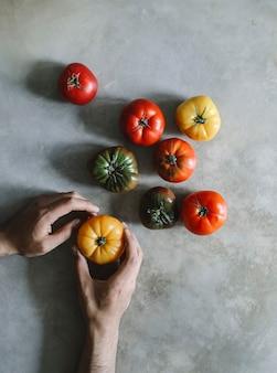 Kolorowe, świeże i organiczne pomidory scheda