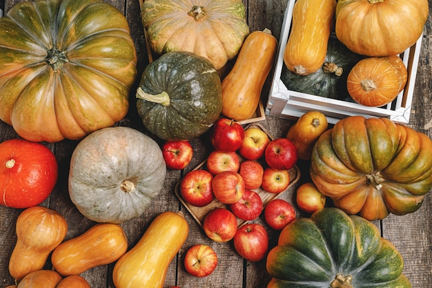 Kolorowe tło jesień z dyni i jabłek
